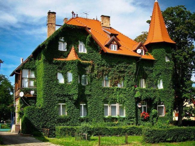 Прикраса будинку рослинами