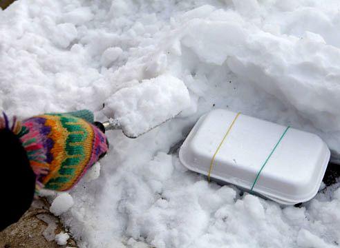 стратифікація насіння примули в снігу