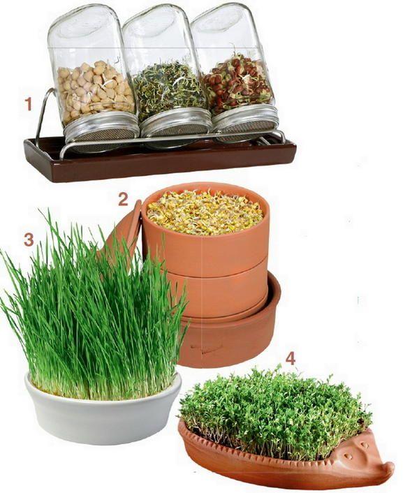 Правильна посуд для пророщування насіння