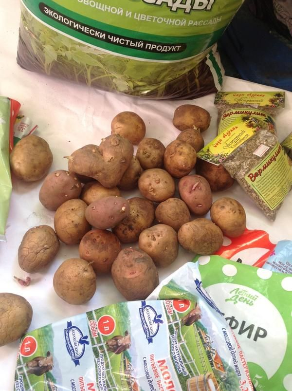 Ранній молода картопля через розсаду