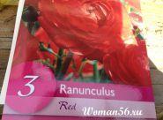 Ранункулюс посадка і догляд (жовтець азіатський ранункулюс фото