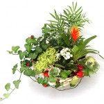 Рослина в вашому домі