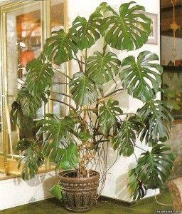 Вибір рослини для будинку.