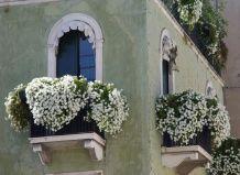 Рослини для балконів