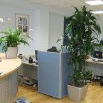 Рослини для офісу