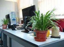 Рослини на робочому місці - інвестиція в здоров`я персоналу