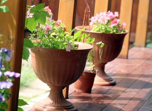 Рослини на веранді в вашому домі