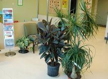 Рослини, що рекомендуються для озеленення лікарень