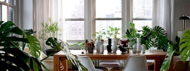 Рослини в будинку і діти