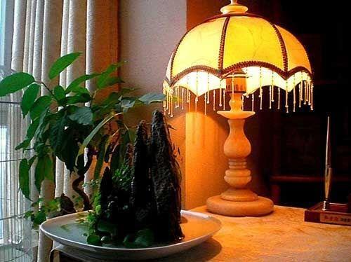 Рослини в будинку - приємний декор інтер`єру