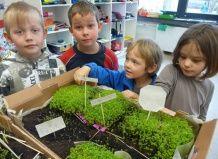 Рослини в класі - запорука успішного навчання