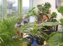 Рослини в кімнаті - зима без вірусів!