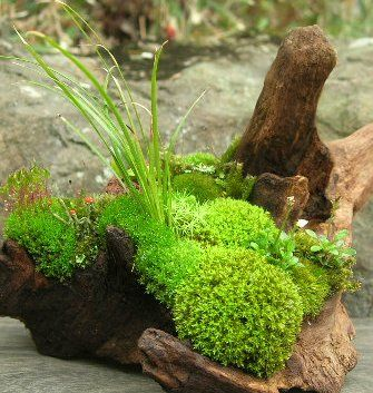 Різні мохи на фото