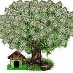 доларове дерево