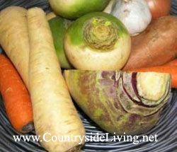 Ріпа, бруква, пастернак: осінні і зимові овочі