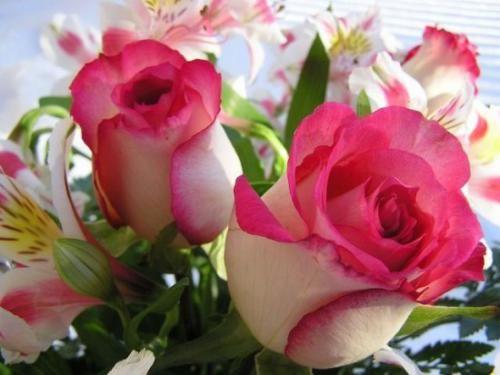 Троянди в картинках для розуміння краси і вишуканості