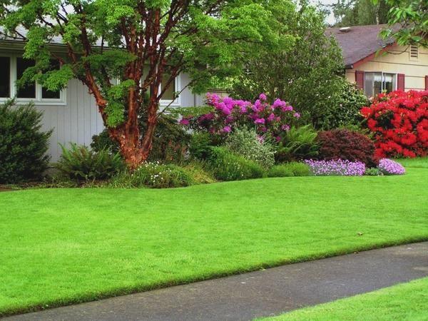 Рулонний газон - вибір не ледарів, а тих, хто знає ціну часу