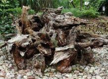 Рутар - сад з коренів, пнів і корчів