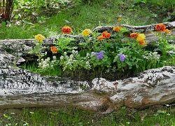 Рутар в дизайні саду