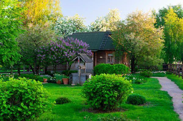 Сад в стилі російської садиби