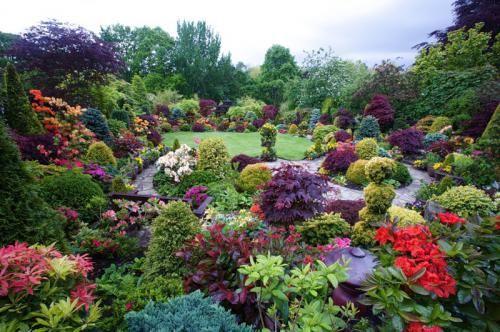 Садові та кімнатні рослини - вічні супутники людини