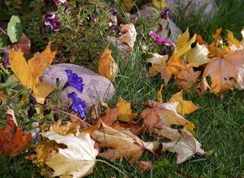 Садовий пилосос для прибирання листя