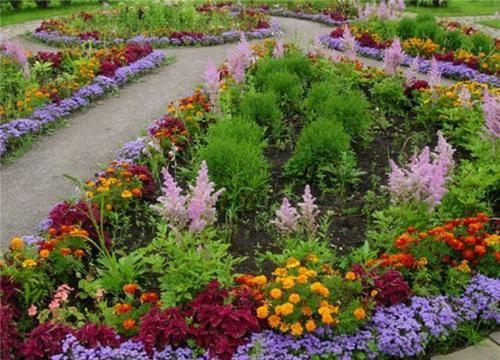 Самі невибагливі квіти для клумби і квітника