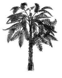 Насінні папороті - вимерлі рослини