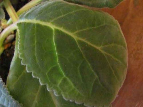 Щитівка на кімнатних рослинах і як боротися з ними