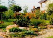 Штамби - прикраса саду