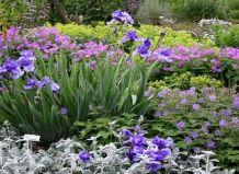 Симфонія фарб в саду