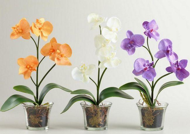 Як правильно доглядати за орхідеями будинку в зимовий період