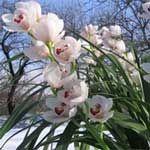 Зміст орхідей взимку: 15 корисних порад