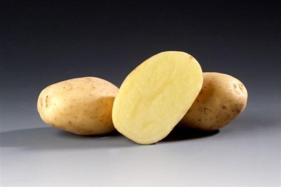 Сорт картоплі Сантана - особливості та розведення
