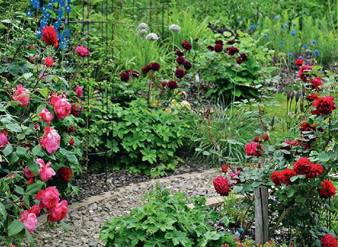 Розарій в маленькому саду