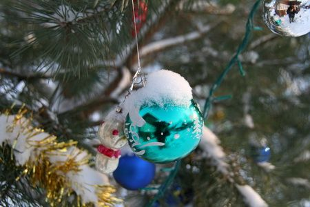Сосна, символ новорічних свят