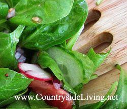 Свіжий салат з французьким соусом (заправкою)