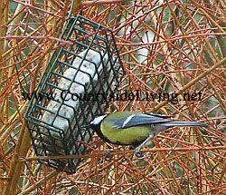 Спеціальний корм для зимуючих птахів