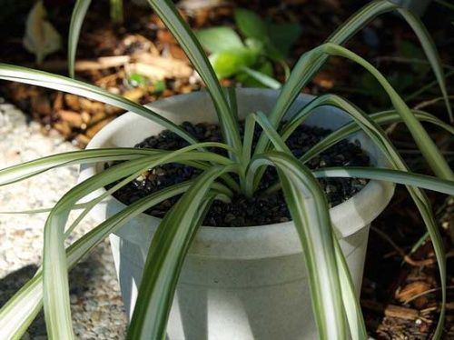 Засоби захисту рослин від хвороб і шкідників