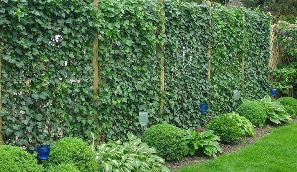 Стіна з квітів і зелені