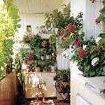 Світло для рослин