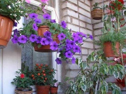 Свіже повітря для квітів - життєва сила рослини