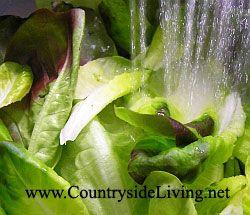 Салат зелений листовий, змішані листя