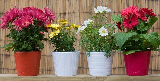 У зимовий період, рослини потрібно розставляти в тих місцях, де до них дотягнеться сонячне світло