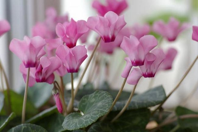 При якій температурі найкраще містити рослини і квіти влітку і взимку