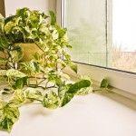 Температура для кімнатних рослин