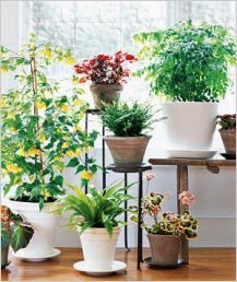 Теплолюбні кімнатні рослини