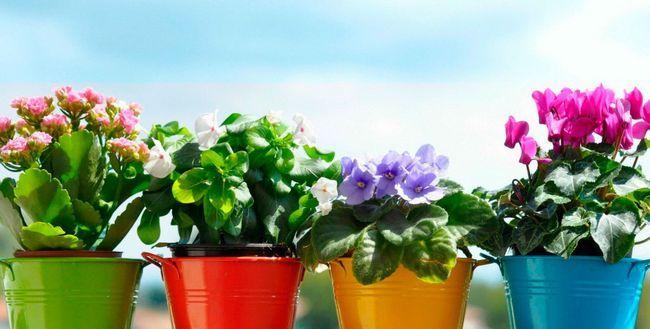 Добрива для кімнатних рослин в домашніх умовах