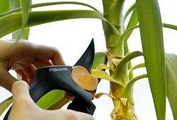 Догляд за домашніми рослинами
