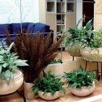 Догляд за рослинами в офісі